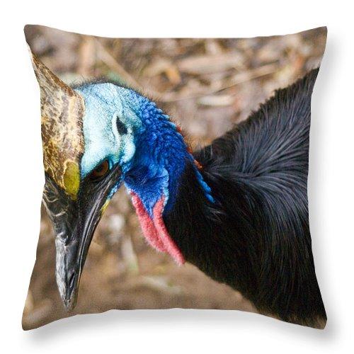 Cassorary Throw Pillow featuring the photograph Southern Cassowary Portrait by Douglas Barnett