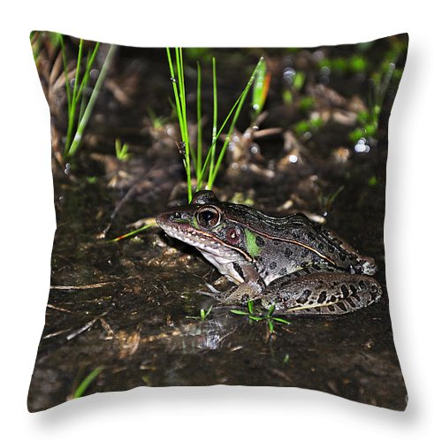 Frog Throw Pillow featuring the photograph Southern Leopard Frog by Al Powell Photography USA