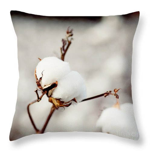 Southern Throw Pillow featuring the photograph Southern Snow by Erin Johnson