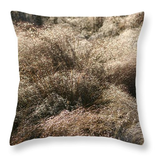 Grasses Throw Pillow featuring the photograph Sparkling Grasses by Nadine Rippelmeyer