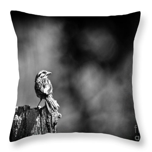 Song Sparrow Throw Pillow featuring the photograph Sparrow In Black And White by Cheryl Baxter