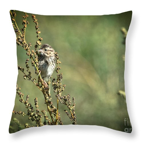 Throw Pillow featuring the photograph Sparrow In The Weeds by Cheryl Baxter