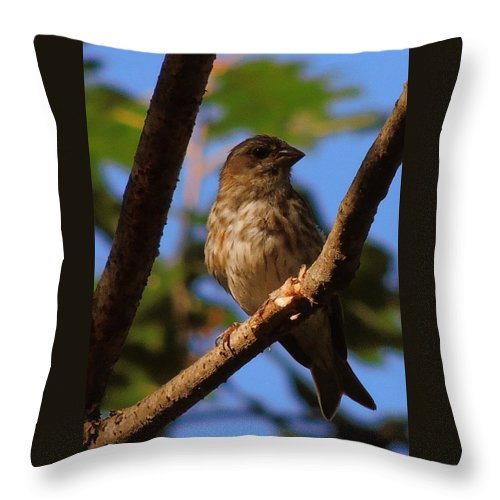 Sparrow Throw Pillow featuring the photograph Sparrow by Mim White