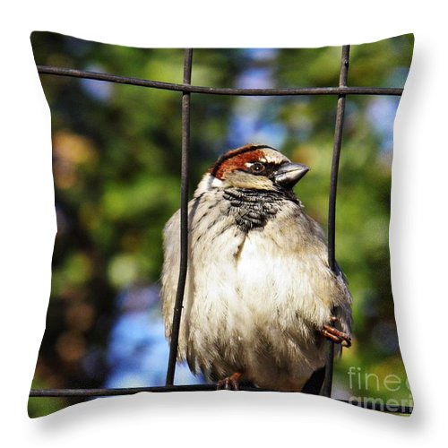 Sparrow On A Wire Fence Throw Pillow featuring the photograph Sparrow On A Wire Fence by Sarah Loft