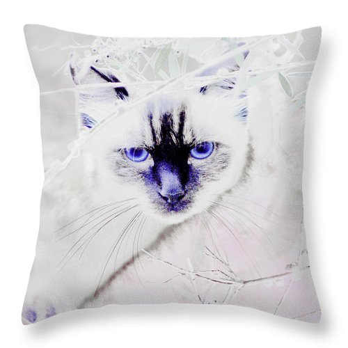 Animals Throw Pillow featuring the photograph Spellbound by Holly Kempe