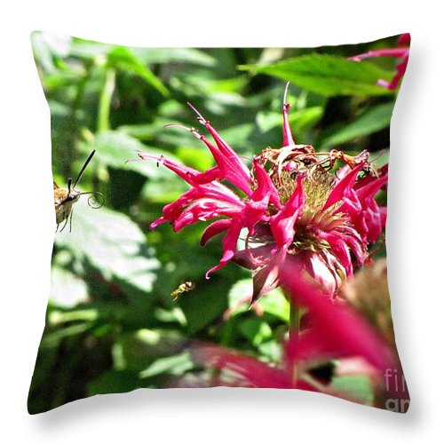 Moth Throw Pillow featuring the photograph Sphinx Moth by Todd Schworm