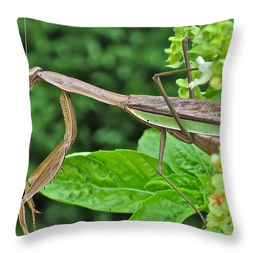 Praying Mantis Throw Pillow featuring the photograph Spice Stalker by Rhonda Leonard