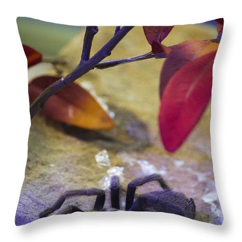 Colorful Throw Pillow featuring the photograph Spider by Becca Buecher