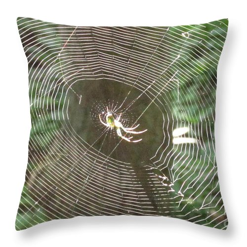 Sunlit Spider Light Spider Sunlight Spider Illuminated Spider Web Light Natural Lightscapes Wild Prints Throw Pillow featuring the photograph Spider Light by Joshua Bales