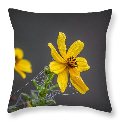 Flower Throw Pillow featuring the photograph Spider Web On The Flower by Ester Rogers