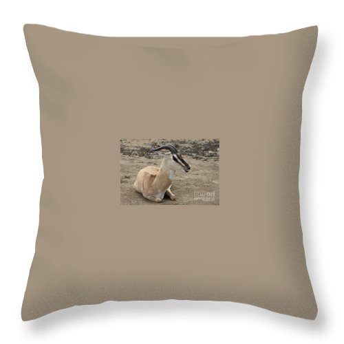 Spiral Horned Antelope Throw Pillow featuring the photograph Spiral Horned Antelope by John Telfer