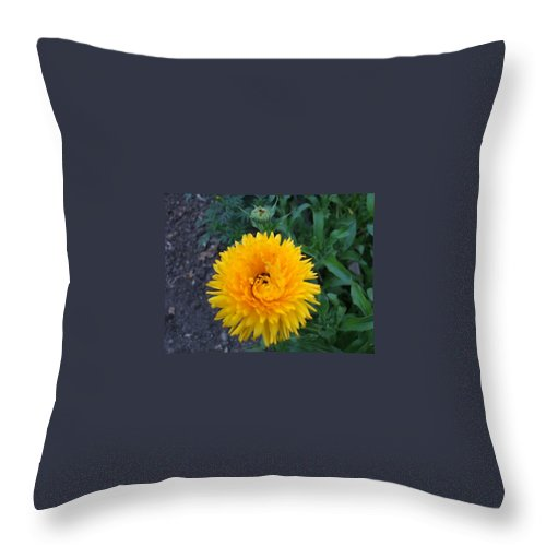 Floral Throw Pillow featuring the photograph Spiral by Jo Dawkins