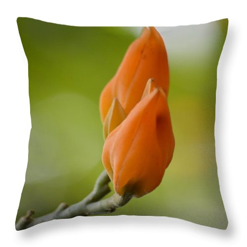 Spirit Of Spring Throw Pillow featuring the photograph Spirit Of Spring by Sonali Gangane
