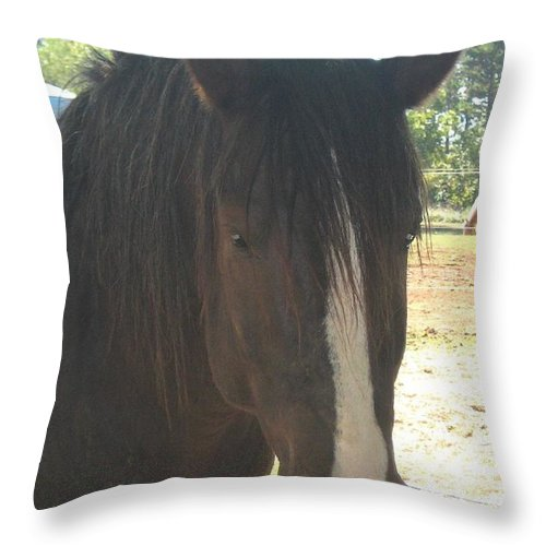 Horse Throw Pillow featuring the photograph Spirit by Wendy Coulson