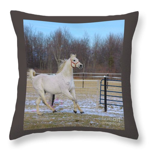 White Throw Pillow featuring the photograph Spirited Horse by Kathleen Struckle