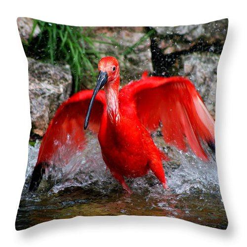 Red Ibis Throw Pillow featuring the photograph Splish Splash - Red Ibis by Christiane Schulze Art And Photography