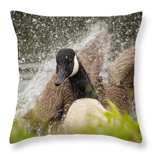 Canada Goose Throw Pillow featuring the photograph Splishing And Splashing by Karol Livote