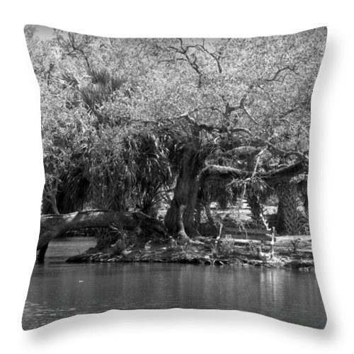 Split In Half Throw Pillow featuring the photograph Split In Half by Beth Vincent