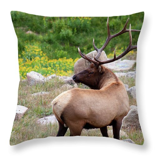 Elk Throw Pillow featuring the photograph Spoiling For A Fight by Jim Garrison
