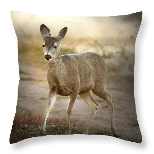 Jean Noren Throw Pillow featuring the photograph Spotlighted Mule Deer by Jean Noren