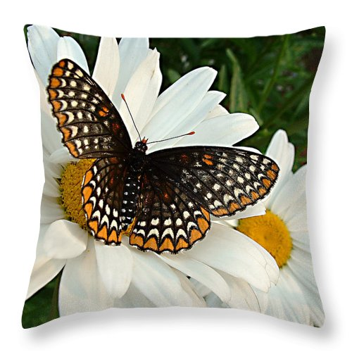 Big Butterfly Throw Pillow featuring the photograph Spotted Butterfly by Tanya Hamell