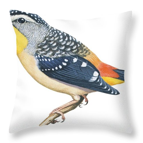 No People; Horizontal; Full Length; White Background; One Animal; Nature; Wildlife; Illustration And Painting; Spotted Diamondbird; Pardalotus Punctatus; Spotted; Multi Colored; Perching; Branch; Zoology Throw Pillow featuring the drawing Spotted Diamondbird by Anonymous
