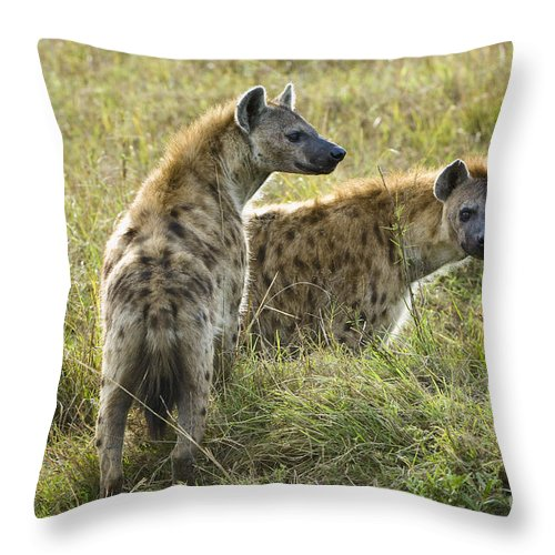 African Fauna Throw Pillow featuring the photograph Spotted Hyaena by John Shaw