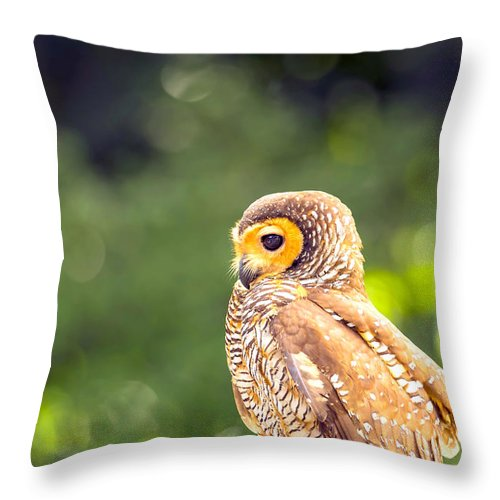 Spotted Owl Throw Pillow featuring the photograph Spotted Owl by Jijo George
