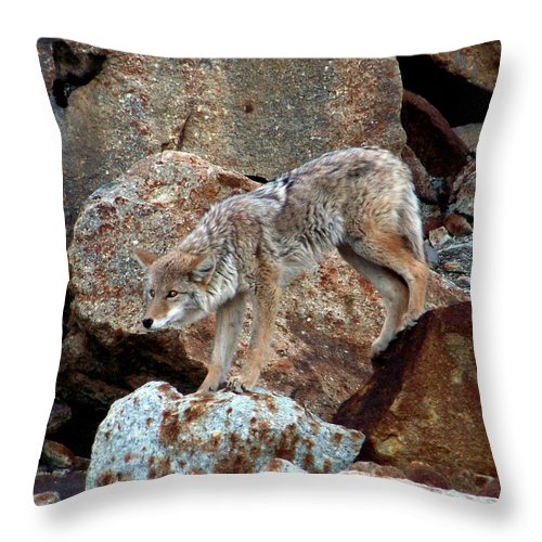 Coyotes Throw Pillow featuring the photograph Spotting Prey by Karen Wiles