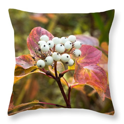 Red Throw Pillow featuring the photograph Sprig Of Pearls by Bill Pevlor