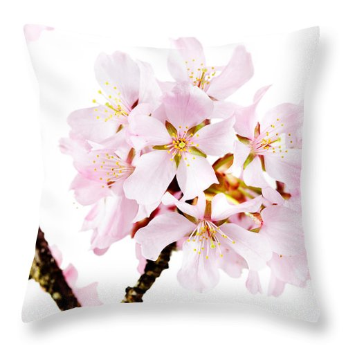 Cherry Blossom Throw Pillow featuring the photograph Spring Beauty by Jo Ann Snover
