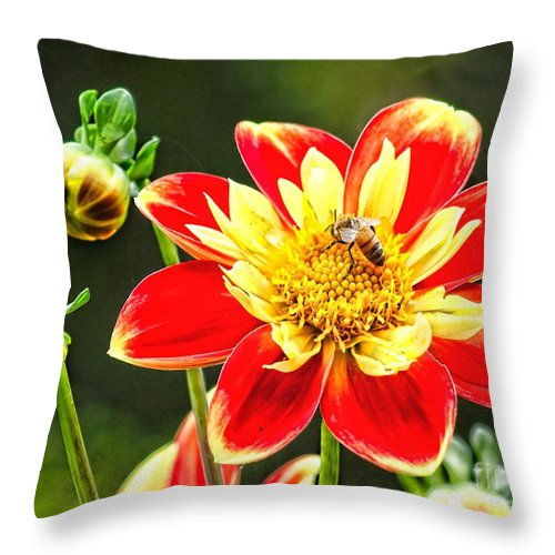 Flower Throw Pillow featuring the photograph Spring Bee by Nick Zelinsky