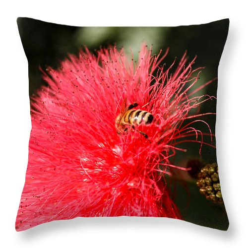 Flower Throw Pillow featuring the photograph Spring Bee Sweet As Honey by George Kenhan