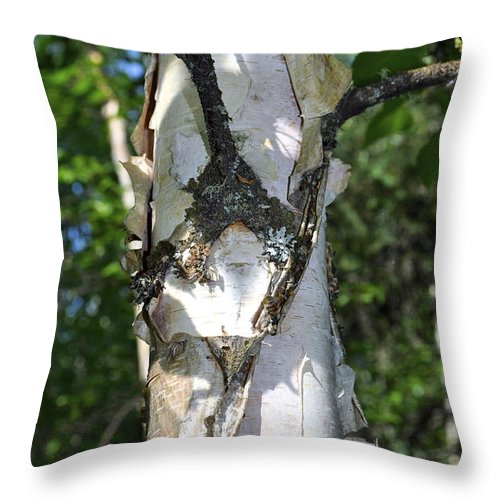 Birch Throw Pillow featuring the photograph Spring Birch by Cathy Mahnke