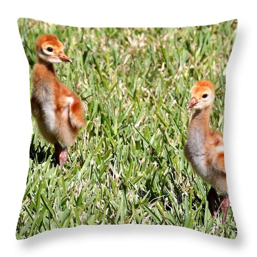 Sandhill Crane Chicks Throw Pillow featuring the photograph Spring Chicks by Carol Groenen