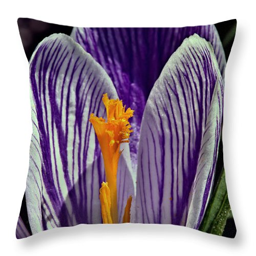 Spring Throw Pillow featuring the photograph Spring Crocus by Tomasz Dziubinski