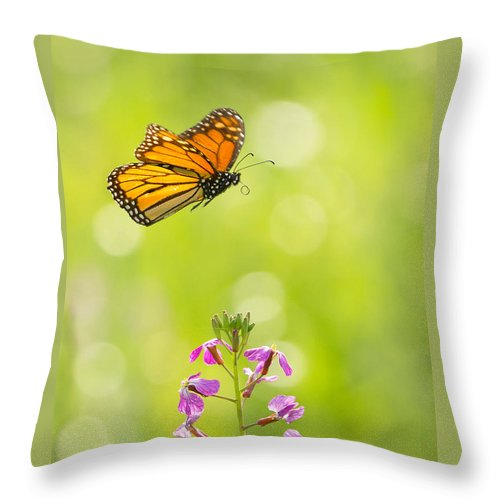 Animal Throw Pillow featuring the photograph Spring Delight by Alice Cahill