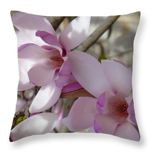 Magnolias Throw Pillow featuring the photograph Spring Delight by Barbara Ebeling