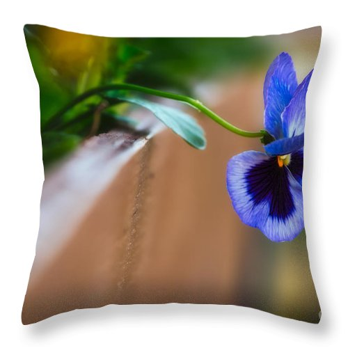 Pansies Throw Pillow featuring the photograph Spring Flowers I by Mary Smyth