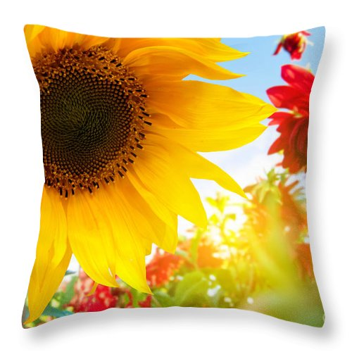 Flower Throw Pillow featuring the photograph Spring Flowers In The Garden by Michal Bednarek