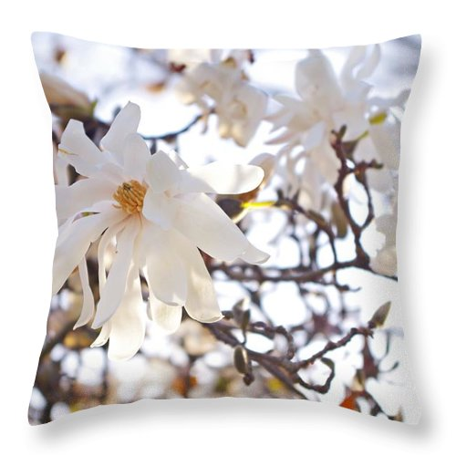 Magnolia Stellata Throw Pillow featuring the photograph Spring Flowers by Sharon Popek