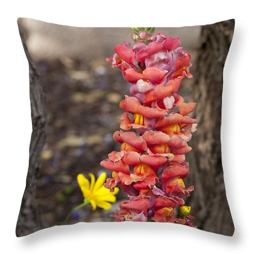 Wildflowers Throw Pillow featuring the photograph Spring Framed by Erika Weber