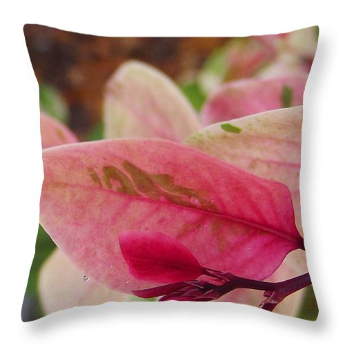 Nature Throw Pillow featuring the photograph Spring Garden by Jimi Bush