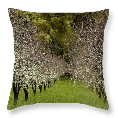 Landscapes Throw Pillow featuring the photograph Spring Has Sprung by Bill Gallagher