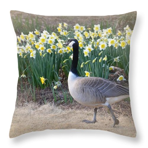 Spring In My Strut Throw Pillow featuring the photograph Spring In My Strut by Maria Urso