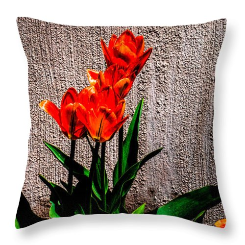 Dutch Throw Pillow featuring the photograph Spring In The City by Donna Lee
