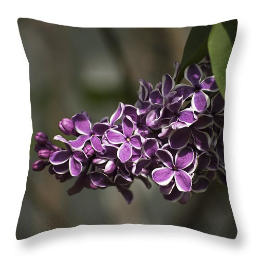 Lilac Throw Pillow featuring the photograph Spring Lilac by Elsa Marie Santoro