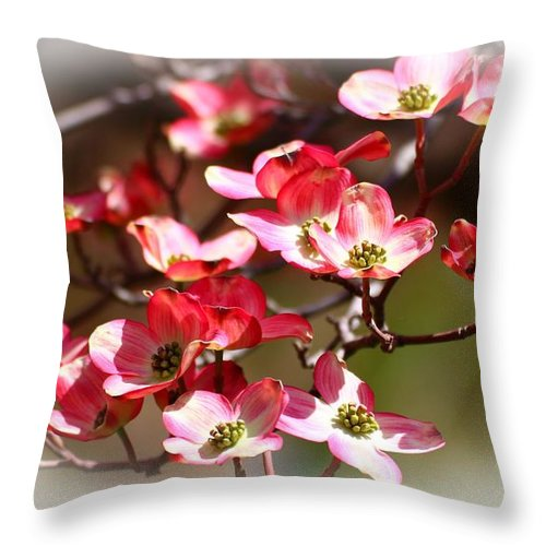 Dogwood Throw Pillow featuring the photograph Blossoms In The Spring by Lynn Hopwood
