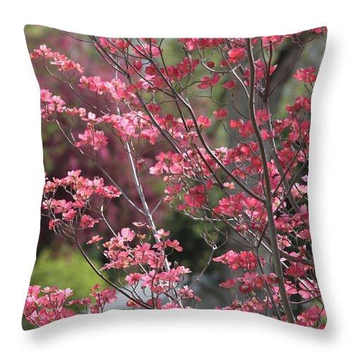 Spring Throw Pillow featuring the photograph Spring Neighborhood by Carol Groenen
