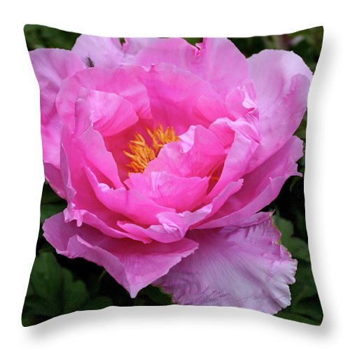 Peony Throw Pillow featuring the photograph Spring Passion by Christiane Schulze Art And Photography